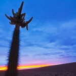 CactusCandelabro2